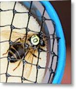 Honeybee Radar Tagging Metal Print