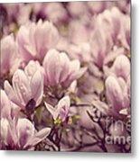 Magnolia Flowers Metal Print