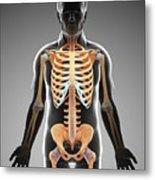 Male Skeletal System Metal Print