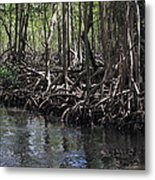 Mangrove Forest In Los Haitises National Park Dominican Republic Metal Print