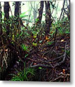 Misty Rainforest El Yunque Metal Print