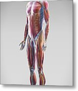 Muscle System Metal Print