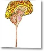 Normal Human Brain, Mri Scan Metal Print