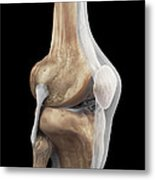 Right Knee Ligaments Metal Print