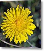 Spring Wild Flower Metal Print by George Atsametakis