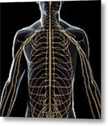 The Nerves Of The Upper Body Metal Print
