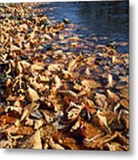 Ussurian Taiga Autumn Metal Print