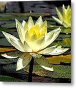 Water-lily Metal Print