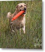 Yellow Labrador Metal Print by Linda Freshwaters Arndt