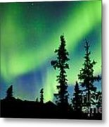 Yukon Taiga Spruce Northern Lights Aurora Borealis Metal Print