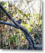 641 Cf Two Branches Metal Print