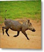 African Mammals Metal Print