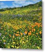 California Poppies Eschscholzia Metal Print