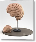 Clay Model Of Brain Metal Print