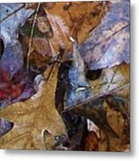 Colors Of The Fall Metal Print