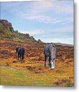 Dartmoor Metal Print
