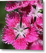 Dianthus Cross Metal Print