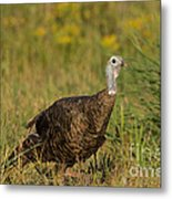 Eastern Wild Turkey Metal Print by Linda Freshwaters Arndt