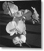 7 Flower Orchid Metal Print