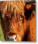 Highland Cow Metal Print by Brian Jannsen