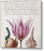 Illuminated Manuscript Metal Print