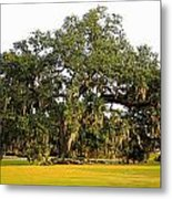 Louisiana Live Oak Tree Metal Print