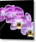 Moon's Orchid  Metal Print