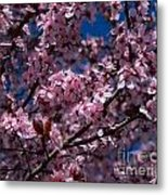 Plum Tree Flowers Metal Print