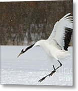 Red-crowned Cranes Metal Print