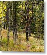 Rocky Mountain Autumn Metal Print