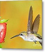 Ruby Throated Hummingbird Female Metal Print