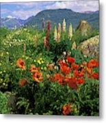 Usa, Colorado, Crested Butte Metal Print