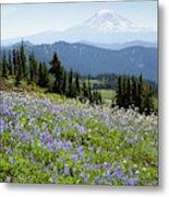Wa, Goat Rocks Wilderness, Wildflower Metal Print