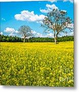 Yellow Field Metal Print