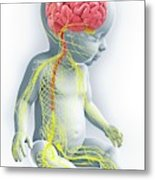 Baby's Nervous System Metal Print