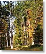 Autumn 2013 Metal Print