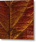 Dogwood Leaf Backlit Metal Print