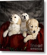 Festive Puppies Metal Print