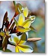 Frangipani Blossom Metal Print