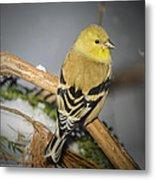 Golden Finch Metal Print