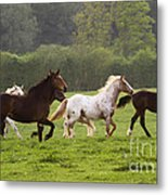 Horses On The Meadow Metal Print