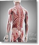 Human Muscles Metal Print