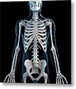 Human Skeleton, Artwork Metal Print