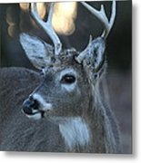 8 Point Buck With Sunset Metal Print