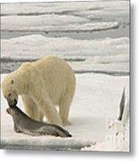 Polar Bear With Fresh Kill Metal Print