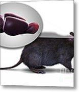 Rat Brain Anatomy Metal Print