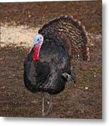 Wild Turkey Metal Print by Thea Wolff