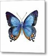 80 Imperial Blue Butterfly Metal Print