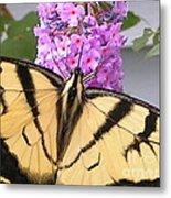 #859 D480 Swallowtail 2010.jpg Metal Print