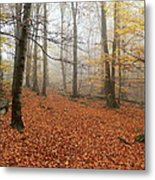 In The Autumn Forest Metal Print
